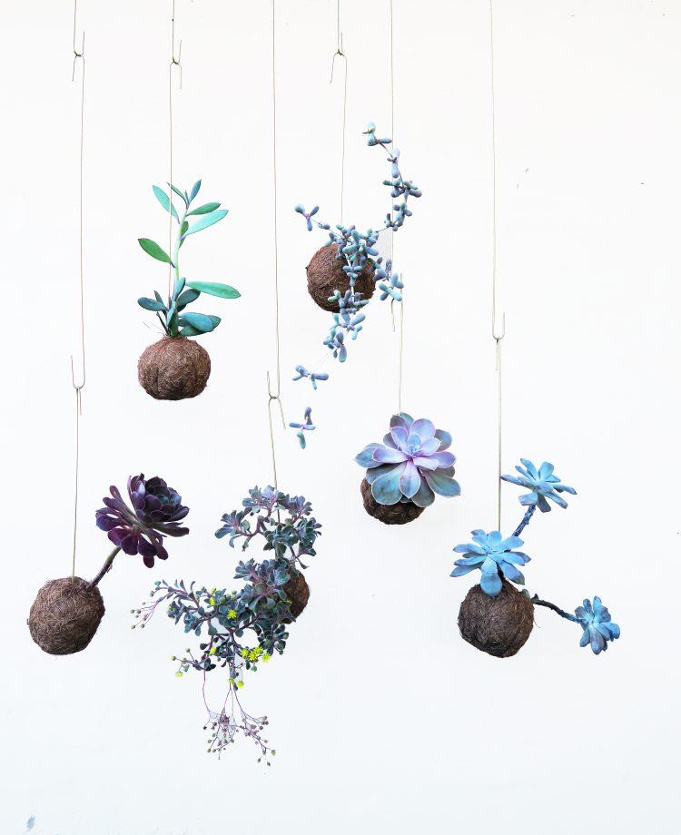 lillaplanteplaneter