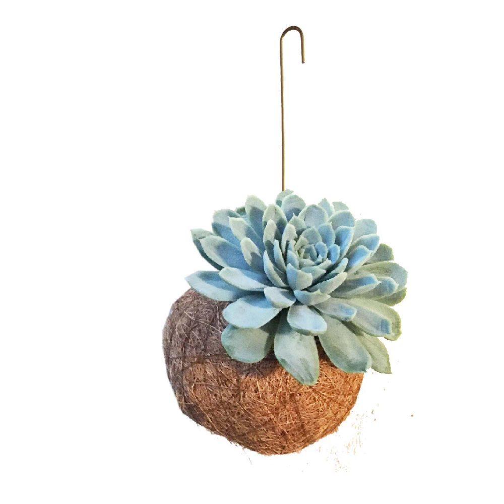 Handmade Echeveria planteplanet smukt dansk design