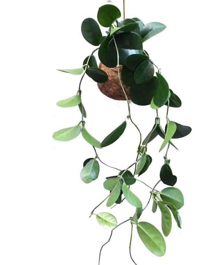 hoja-kajaskytte-planetplaneter-greenliving-hanginggarden-tiny