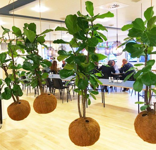 danskespil-web-planteplaneter-kajaskytte