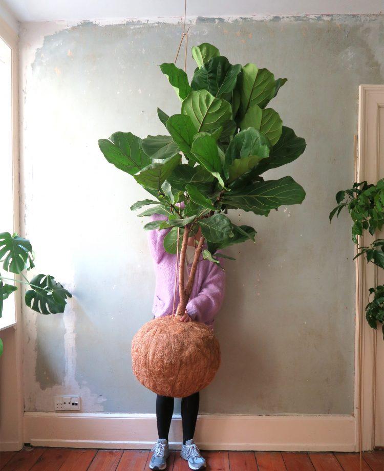 planteplaneter-mega-kajasskytte-tra copy