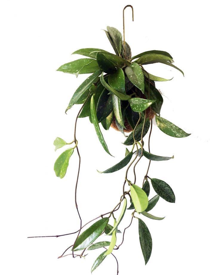 kajaskytte-planteplaneter-greenliving-hpya-haningtree-nature-danishdesign