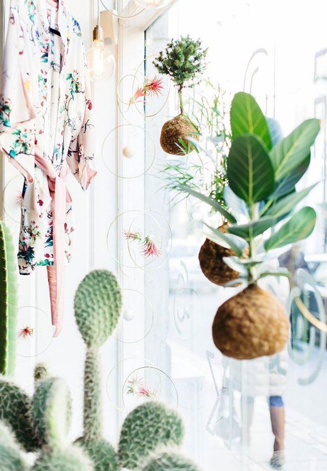 planteplaneter-figus-hængende-blomster-kajaskytte-hængeplante.jpg