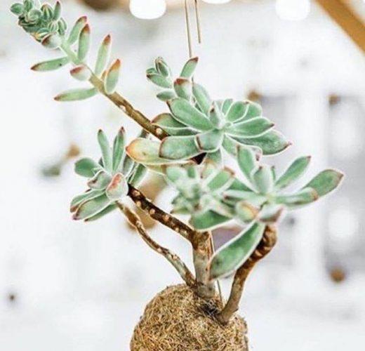 planteplaneter-kaja-skytte-hængende-blomster-kajaskytte-hængeplante.jpg