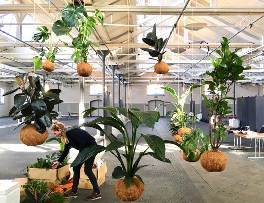 Megaplantep-kajaskytte-planteplaneter